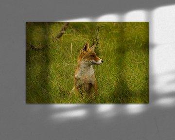 Waakzame vos van Wim Brauns