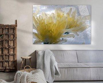 Gelbe Chrysantheme in Eis 3