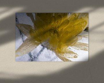 Gelbe Chrysantheme in Eis 1