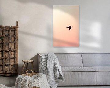 Vogel bei Sonnenuntergang von Thomas Procek