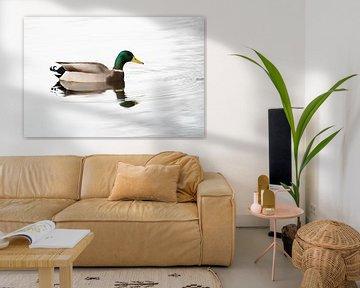 Ente von Glenn Vlekke