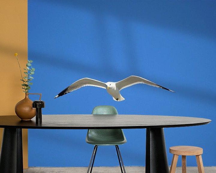Beispiel fototapete: Möwe im Flug von Philipp Klassen