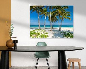 Palmen am Strand des Tropenparadieses Cay Levisa von Teun Janssen