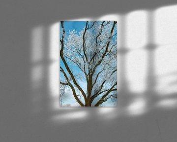 Bevroren besneeuwde winterbomen met een mooie blauwe lucht in de achtergrond van Sjoerd van der Wal