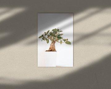boompje van Michael Schulz-Dostal