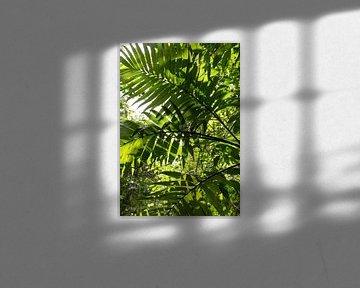 Jungle de feuilles