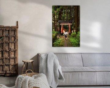 Wandern in den japanischen Wäldern, Kyoto, Japan von Sebastian Rollé - travel, nature & landscape photography