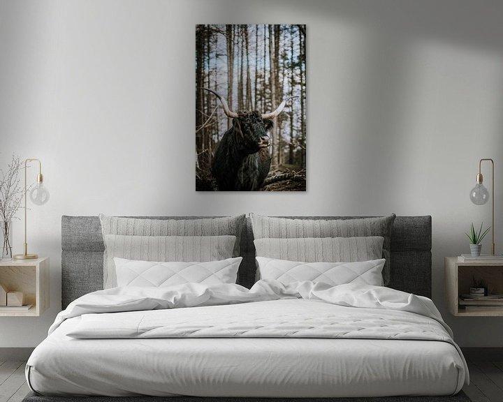 Sfeerimpressie: Schotse Hoogland Vee Langhoorn in het wild Senne van Helena Schröder
