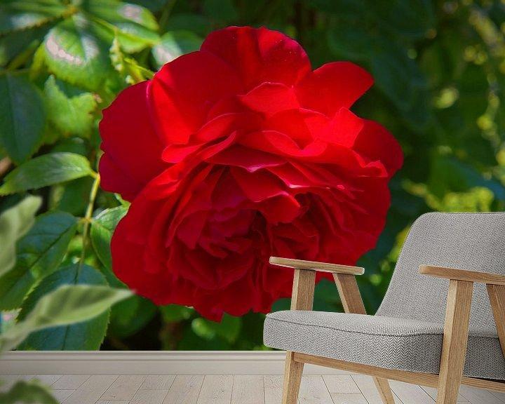 Beispiel fototapete: Rote Rose in einem Schlossgarten von Rijk van de Kaa