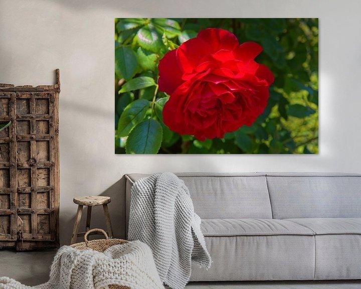 Beispiel: Rote Rose in einem Schlossgarten von Rijk van de Kaa