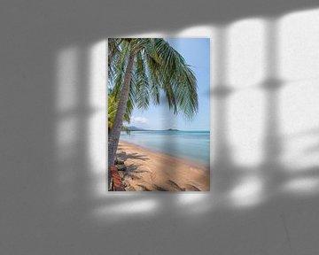 Palmboom op het strand van Bernd Hartner