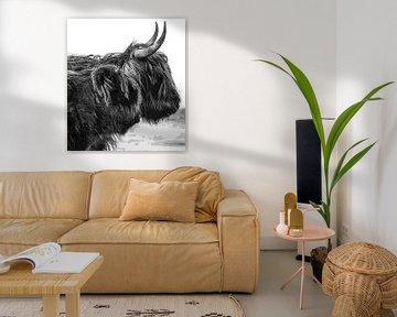Schotse Hooglanders silhouet van Ans Bastiaanssen