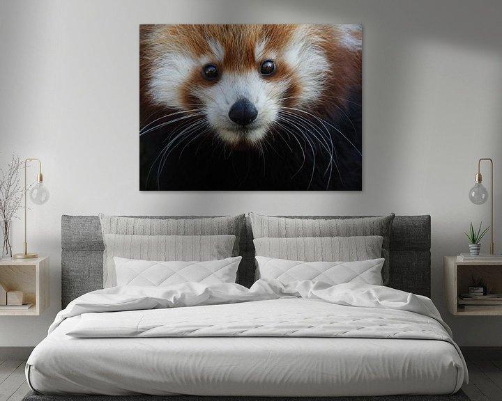 Beispiel: Junger roter Panda von Eye to Eye Xperience By Mris & Fred