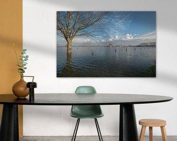 Hoogwater bij haven Maurik van Moetwil en van Dijk - Fotografie
