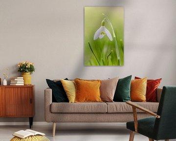 Snowdrop sur KB Design & Photography (Karen Brouwer)