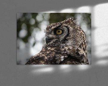 Eule von Eye to Eye Xperience By Mris & Fred