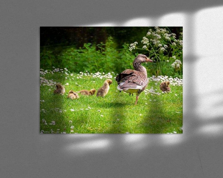 Sfeerimpressie: Ganz met kuikens in het gras van Charlotte Dirkse