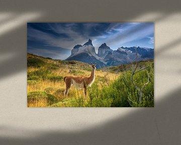 Guanaco bij Torres del Paine, Patagonië van Dieter Meyrl