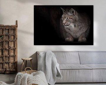 De roodachtige lynx kijkt met belangstelling van Michael Semenov
