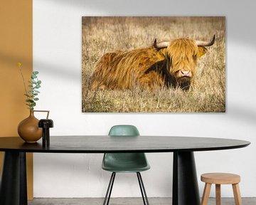 Schotse Hooglander liggend in het gras van Marco Leeggangers