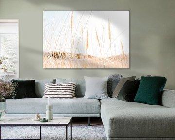 Helmgras in de duinen van Noord-Holland van Melissa Peltenburg
