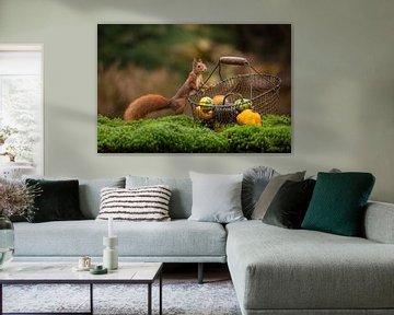 Eichhörnchen mit Einkaufskorb von Caroline van der Vecht