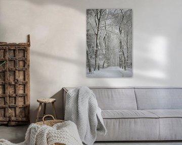 Sneeuw in het bos van Danielle Bosschaart