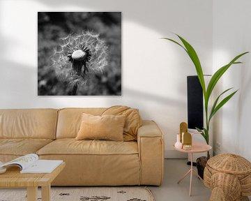 Löwenzahn Schwarz-Weiß-Fotografie von Marie-Claire Aling