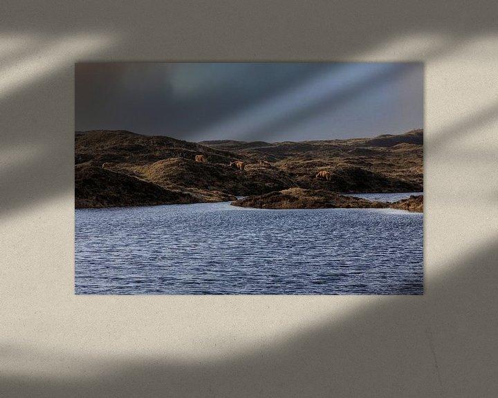 Sfeerimpressie: Schotse hooglanders in de Texelse duinen van Everydayapicture_byGerard  Texel