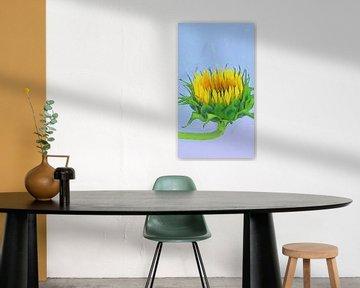 Sonnenblume schaut auf von Schildersatelier van der Ven