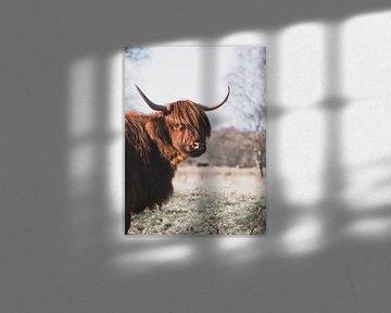 Portret van een Schotse Hooglander van Milou Schothuis