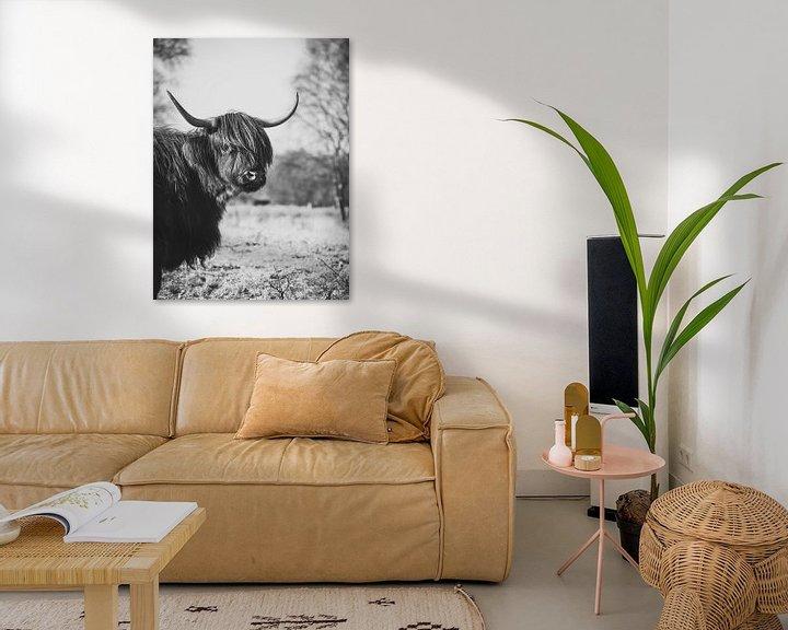 Sfeerimpressie: Zwart witte Schotse Hooglander. van Milou Schothuis