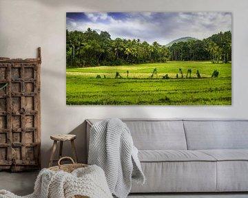 Panorama des paysages avec des rizières vertes au Sri Lanka sur Dieter Walther