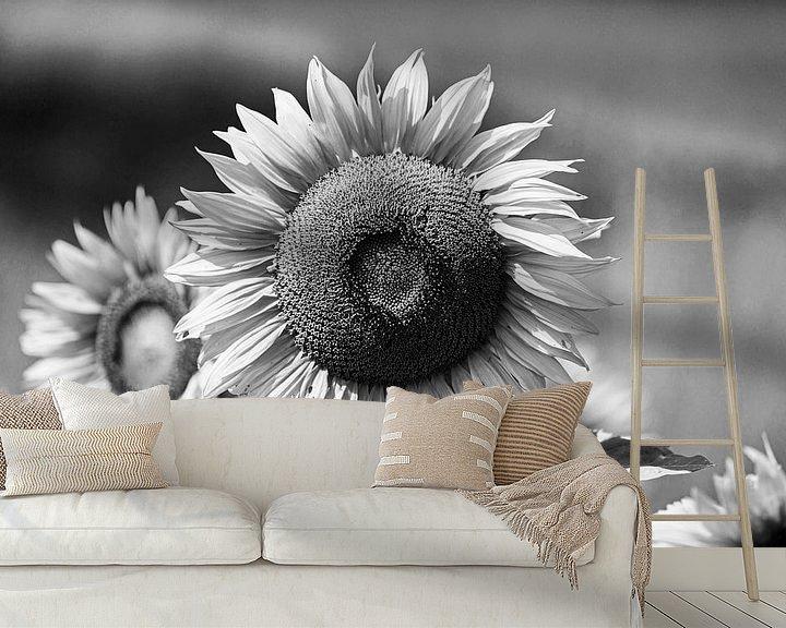 Beispiel fototapete: Sonnenblume Shwarzweiss von Frank Herrmann