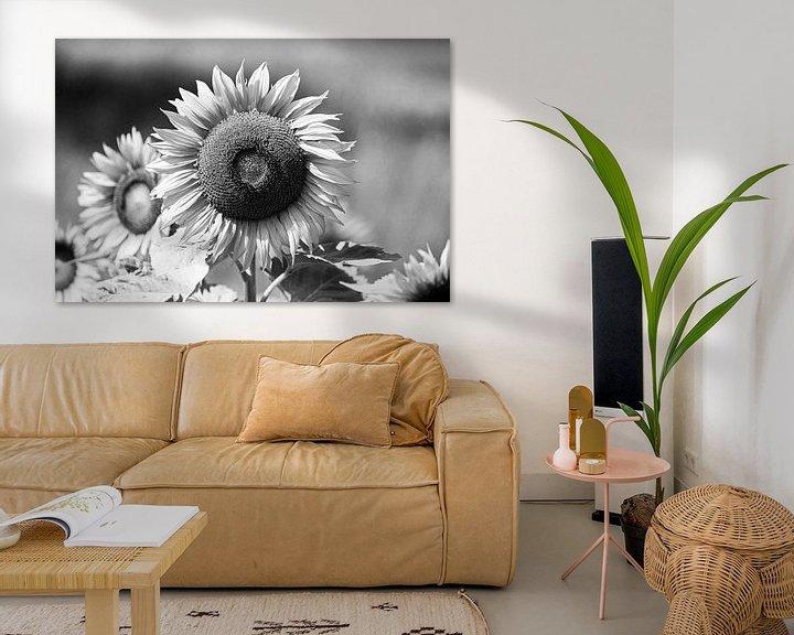 Beispiel: Sonnenblume Shwarzweiss von Frank Herrmann