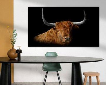 Schotse Hooglander van Marco Leeggangers