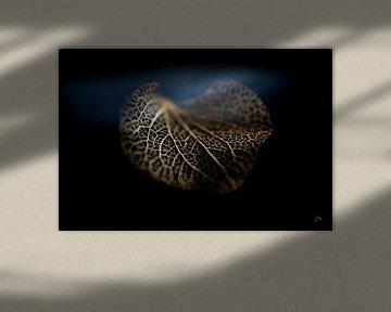 Herbststillleben: Hortensie von BILAS