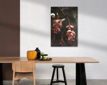 Medinilla Magnifica | Rosa Blume in Blüte im Gewächshaus von Eva Krebbers | Tumbleweed & Fireflies Photography