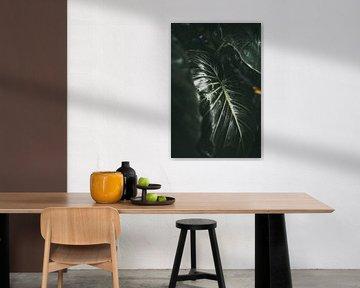 Dunkles Blatt | Botanischer Fotodruck | Tumbleweed &; Glühwürmchen Fotografie von Eva Krebbers | Tumbleweed & Fireflies Photography
