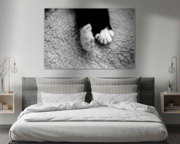 Schlaf Kätzchen schlafen von Erol Cagdas
