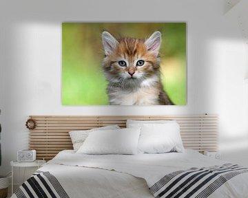 Kleine süße Katze