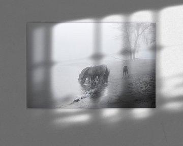 De Konikpaarden van het Munnikenland. van Henri Ton