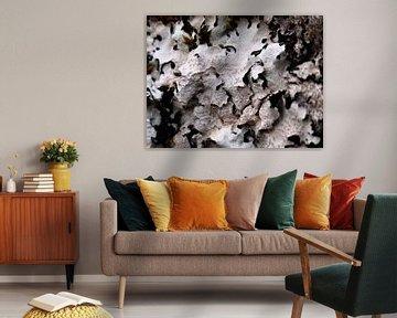 Abstract boomschors XI van Maurice Dawson
