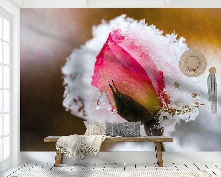 Beispiel fototapete: Rosenblüte im Schnee von Nicc Koch