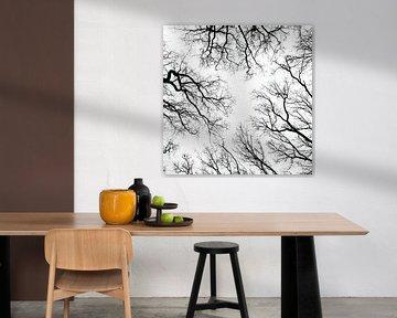 silhouet van bomen van Klaartje Majoor