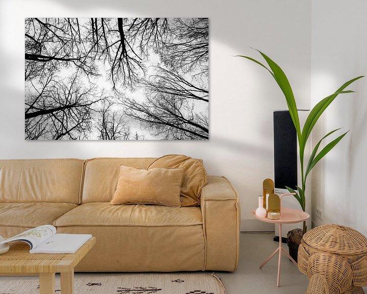 Beispiel: Blick in die Baumkronen von Fartifos