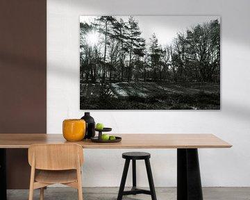 zwart wit in het bos met zon en schaduw van Lieke van Grinsven van Aarle