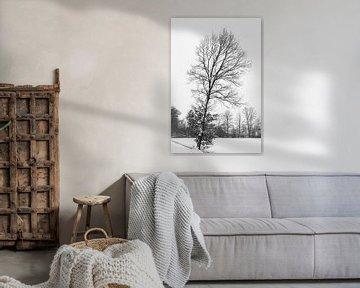 Eiken boom in een sneeuw landschap. von Lieke van Grinsven van Aarle