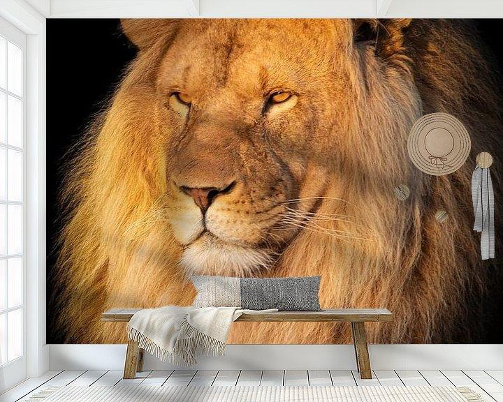 Sfeerimpressie behang: Leeuw in het zonnetje van Marjolein van Middelkoop