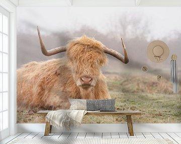 Schotse hooglander in de mist in Nederland van Joyce van Galen